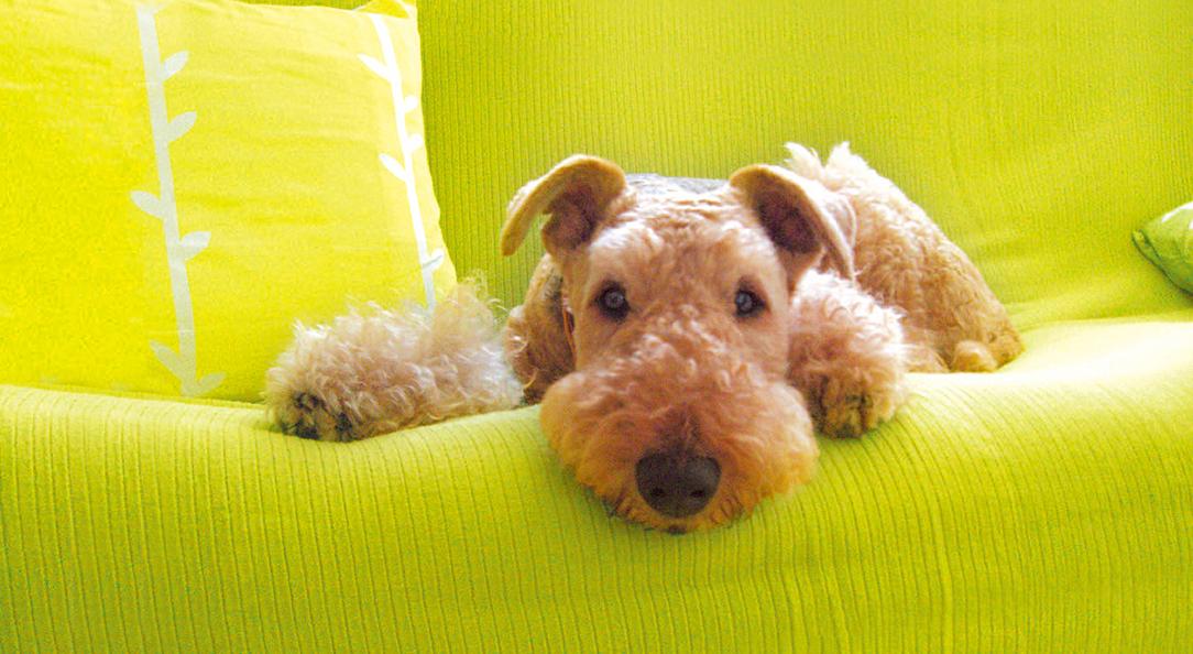 もし愛犬が花粉症になってしまったら?注意してあげたい4つのポイント