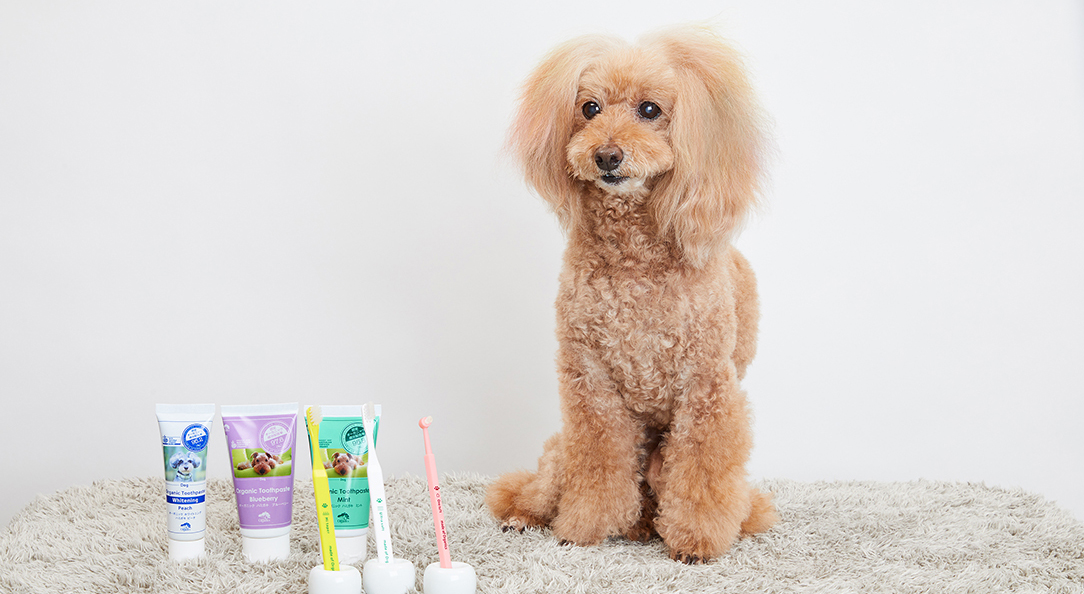 愛犬の歯磨きってなぜ大切?