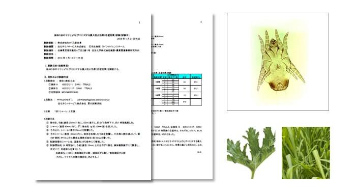 布用シトロネラ・ゼラニウム液剤のヤケヒョウヒダニ忌避効果試験