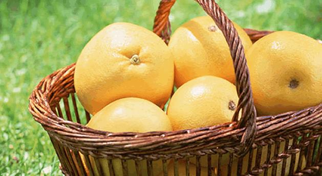 グレープフルーツ〈甘味、酸味、苦味のハーモニー〉