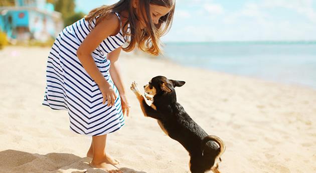 愛犬の暑さ対策、家族にできること
