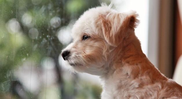 愛犬のために梅雨の時期に注意したい3つのトラブル