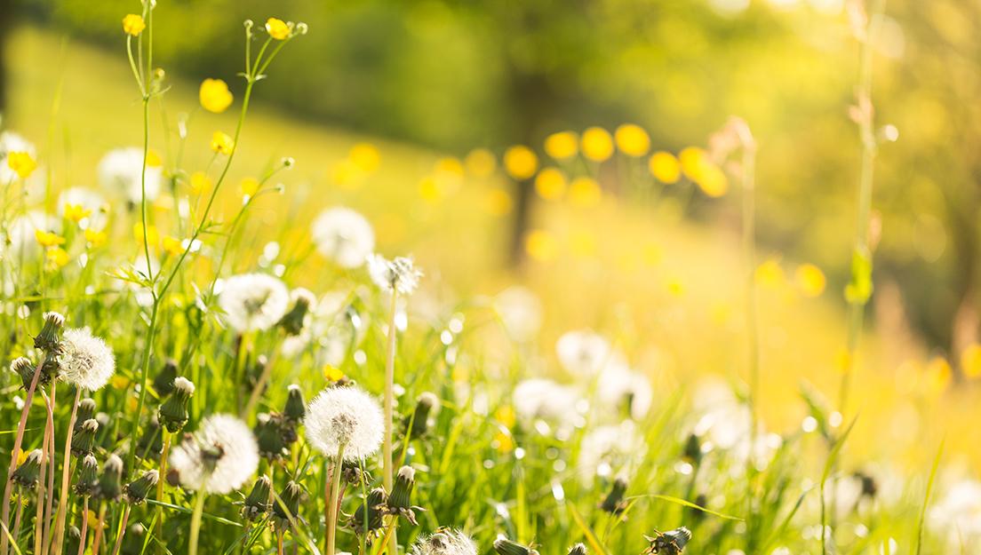 春の心配事に。外出時&家の中で今すぐ始める健康+衛生対策