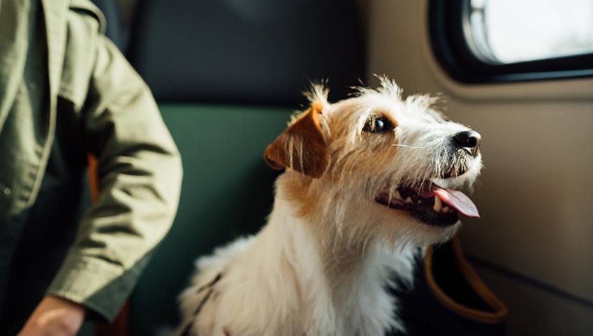 <保存版>愛犬との旅行を楽しむチェックリスト
