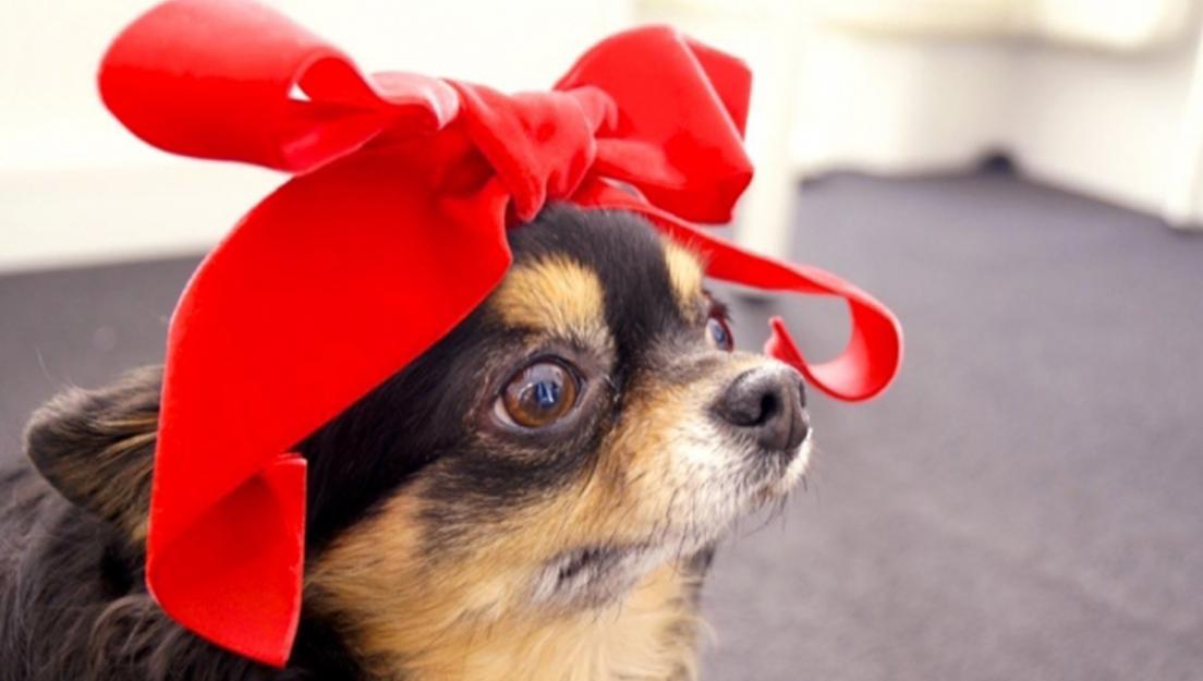 【いつもそばにいてくれる愛犬たちへ】心から安心できるプレゼントを